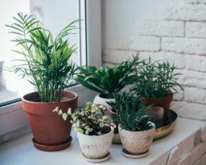 Houseplants.